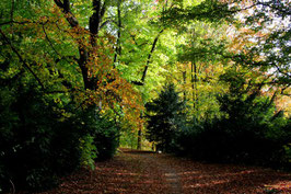 Leinwandbild, aus Wald und Flur, Motiv: 0392, auf einen Trägerrahmen gespannt
