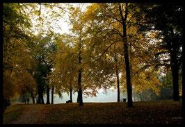 Leinwandbild, aus Wald und Flur, Motiv: 0404, in einem Rahmen mit Schattenfuge