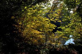 Leinwandbild, aus Wald und Flur, Motiv: 0259, auf einen Trägerrahmen gespannt