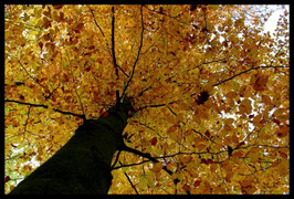 Leinwandbild, aus Wald und Flur, Motiv: 0507, in einem Rahmen mit Schattenfuge