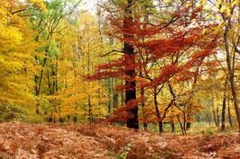 Leinwandbild, aus Wald und Flur, Motiv: 0528, auf einen Trägerrahmen gespannt
