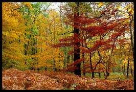 Leinwandbild, aus Wald und Flur, Motiv: 0529, in einem Massivholzrahmen