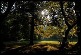 Leinwandbild, aus Wald und Flur, Motiv: 0006, in einem Rahmen mit Schattenfuge