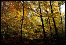 Leinwandbild, aus Wald und Flur, Motiv: 0486, in einem Rahmen mit Schattenfuge