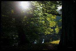 Leinwandbild, aus Wald und Flur, Motiv: 0014, in einem Rahmen mit Schattenfuge