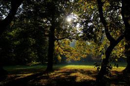 Leinwandbild, aus Wald und Flur, Motiv: 0006, auf einen Trägerrahmen gespannt