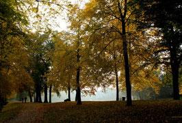 Leinwandbild, aus Wald und Flur, Motiv: 0404, auf einen Trägerrahmen gespannt