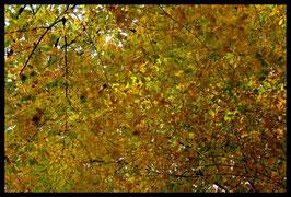 Leinwandbild, aus Wald und Flur, Motiv: 0523, in einem Rahmen mit Schattenfuge
