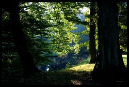 Leinwandbild, aus Wald und Flur, Motiv: 0015, in einem Rahmen mit Schattenfuge