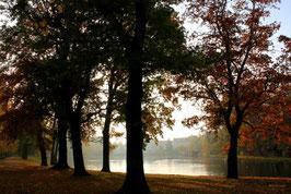 Leinwandbild, aus Wald und Flur, Motiv: 0408, auf einen Trägerrahmen gespannt