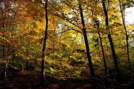 Leinwandbild, aus Wald und Flur, Motiv: 0486, auf einen Trägerrahmen gespannt