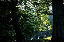 Leinwandbild, aus Wald und Flur, Motiv: 0013, auf einen Trägerrahmen gespannt