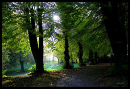 Leinwandbild, aus Wald und Flur, Motiv: 0375, in einem Massivholzrahmen