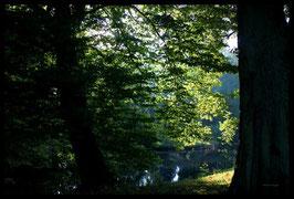 Leinwandbild, aus Wald und Flur, Motiv: 0013, in einem Rahmen mit Schattenfuge