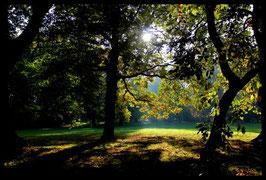 Leinwandbild, aus Wald und Flur, Motiv: 0007, in einem Rahmen mit Schattenfuge