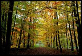 Leinwandbild, aus Wald und Flur, Motiv: 0562, in einem Massivholzrahmen