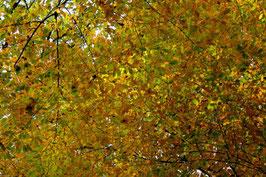 Leinwandbild, aus Wald und Flur, Motiv: 0523, auf einen Trägerrahmen gespannt