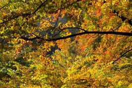 Leinwandbild, aus Wald und Flur, Motiv: 0394, auf einen Trägerrahmen gespannt