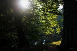 Leinwandbild, aus Wald und Flur, Motiv: 0014, auf einen Trägerrahmen gespannt