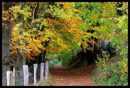 Leinwandbild, aus Wald und Flur, Motiv: 0533, in einem Massivholzrahmen