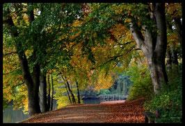 Leinwandbild, aus Wald und Flur, Motiv: 0374, in einem Massivholzrahmen