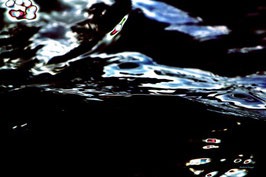 Leinwandbild, Motiv: alles in Fluss 2777, auf einen Trägerrahmen gespannt