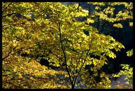 Leinwandbild, aus Wald und Flur, Motiv: 0261, in einem Rahmen mit Schattenfuge