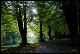 Leinwandbild, aus Wald und Flur, Motiv: 0375, in einem Rahmen mit Schattenfuge