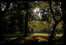 Leinwandbild, aus Wald und Flur, Motiv: 0006, in einem Massivholzrahmen