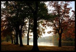 Leinwandbild, aus Wald und Flur, Motiv: 0408, in einem Rahmen mit Schattenfuge