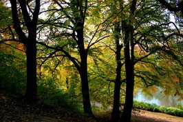 Leinwandbild, aus Wald und Flur, Motiv: 0388, auf einen Trägerrahmen gespannt