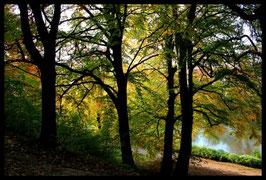 Leinwandbild, aus Wald und Flur, Motiv: 0388, in einem Rahmen mit Schattenfuge