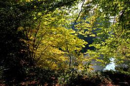 Leinwandbild, aus Wald und Flur, Motiv: 0260, auf einen Trägerrahmen gespannt