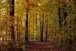 Leinwandbild, aus Wald und Flur, Motiv: 0522, auf einen Trägerrahmen gespannt