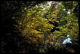 Leinwandbild, aus Wald und Flur, Motiv: 0259, in einem Rahmen mit Schattenfuge