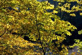Leinwandbild, aus Wald und Flur, Motiv: 0261, auf einen Trägerrahmen gespannt
