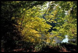 Leinwandbild, aus Wald und Flur, Motiv: 0260, in einem Rahmen mit Schattenfuge