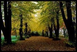Leinwandbild, aus Wald und Flur, Motiv: 0572, in einem Massivholzrahmen