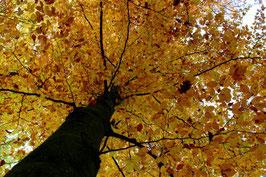 Leinwandbild, aus Wald und Flur, Motiv: 0507, auf einen Trägerrahmen gespannt
