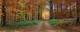 "Hintergrundbild Herbst/ Background ""autumn"""