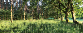 """Hintergrundbild Sommer/ Background """"summer"""""""