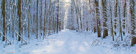 """Hintergrundbild Winter/ Background """"winter"""""""