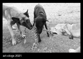 art+dogs 2021   A4