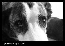 perreradogs 2020   A4