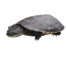 Nicht die passende Schilkröte dabei? Kein Problem!