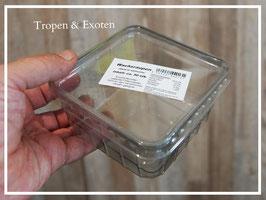 Heimchendosen Futtertierdosen durchsichtig perforiert/gelocht mit Deckel
