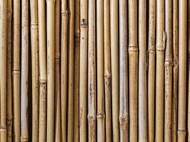Bambusstangen 2 Größen zur Auswahl