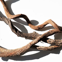Drachen Liane natur ca.  60cm 2-3cm Durchmesser