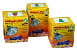 Lucky Reptile Halogen sun Spotstrahler 50W/75W/100W
