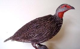 Rotkehlfrankolin
